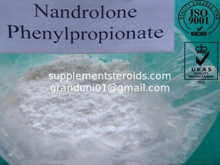 China Pharmaceutical Nandrolone Phenylpropionate Steroid Powder CAS NO. 62-90-8 supplier