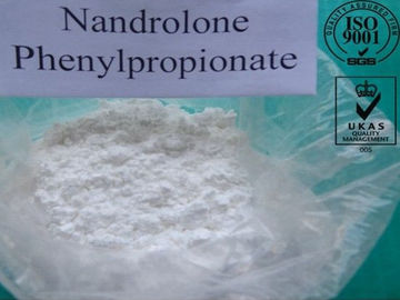 Pharmaceutical Nandrolone Phenylpropionate Steroid Powder CAS NO. 62-90-8