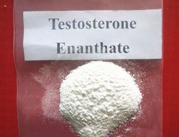 China estosterone Enanthate Raw Testosterone Powder factory